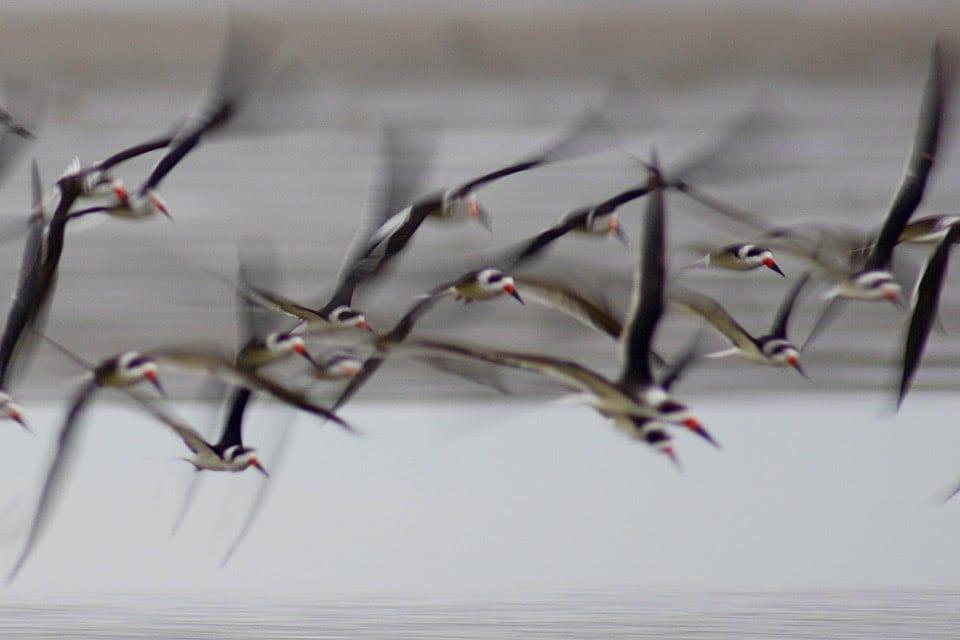 birds-and-wildlife