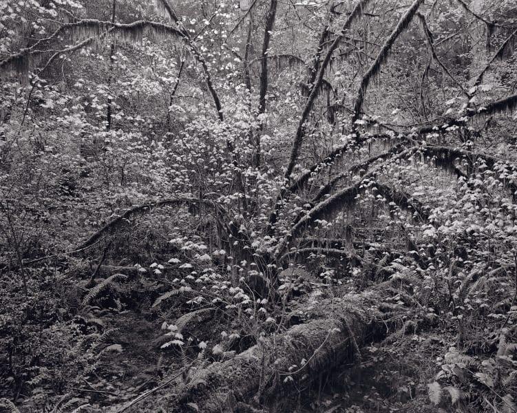 rrothman_redwoods-1689_2