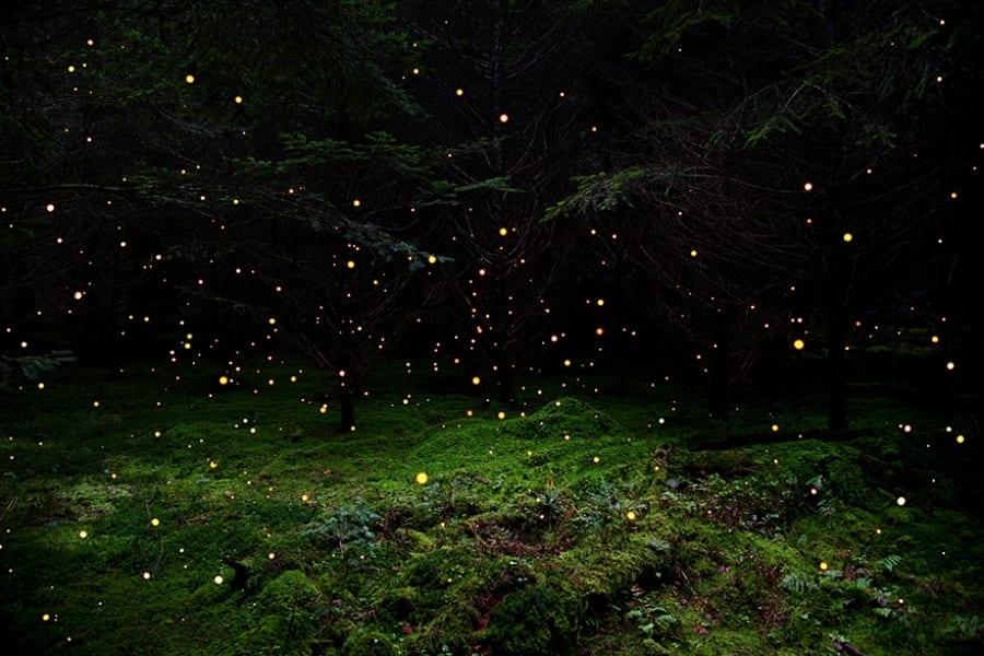 stars-5