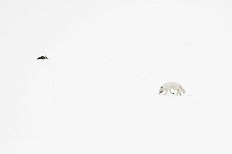 laura-hannusch_camouflage-fox_2019