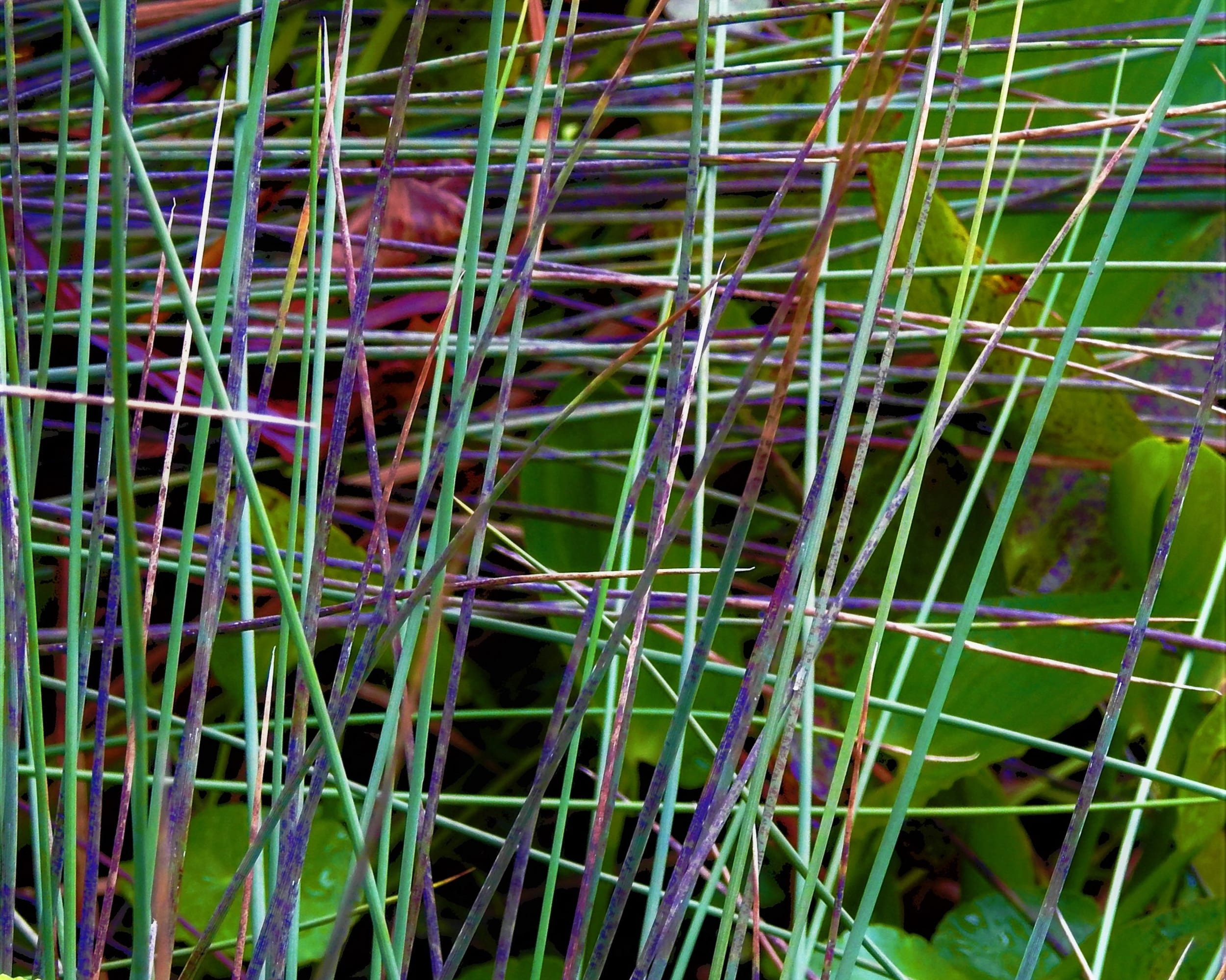 cynthialchappell-technicolor-grass-digital-dslr-2019