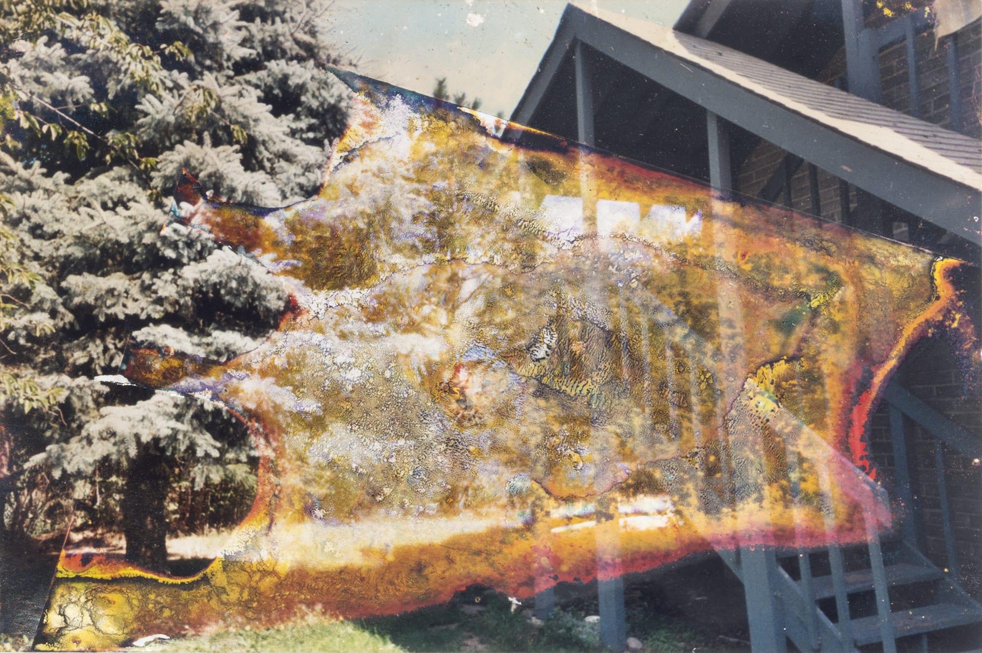 winter-garden-photograph-project-6