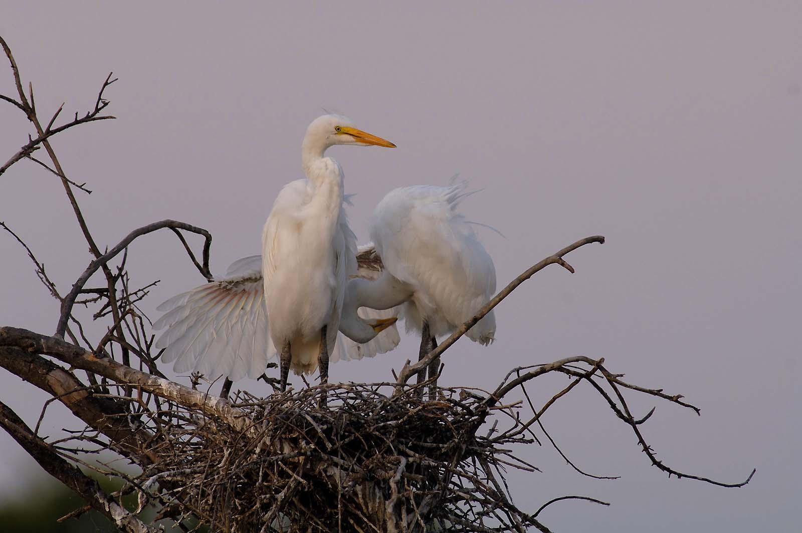 photo-for-birds-class