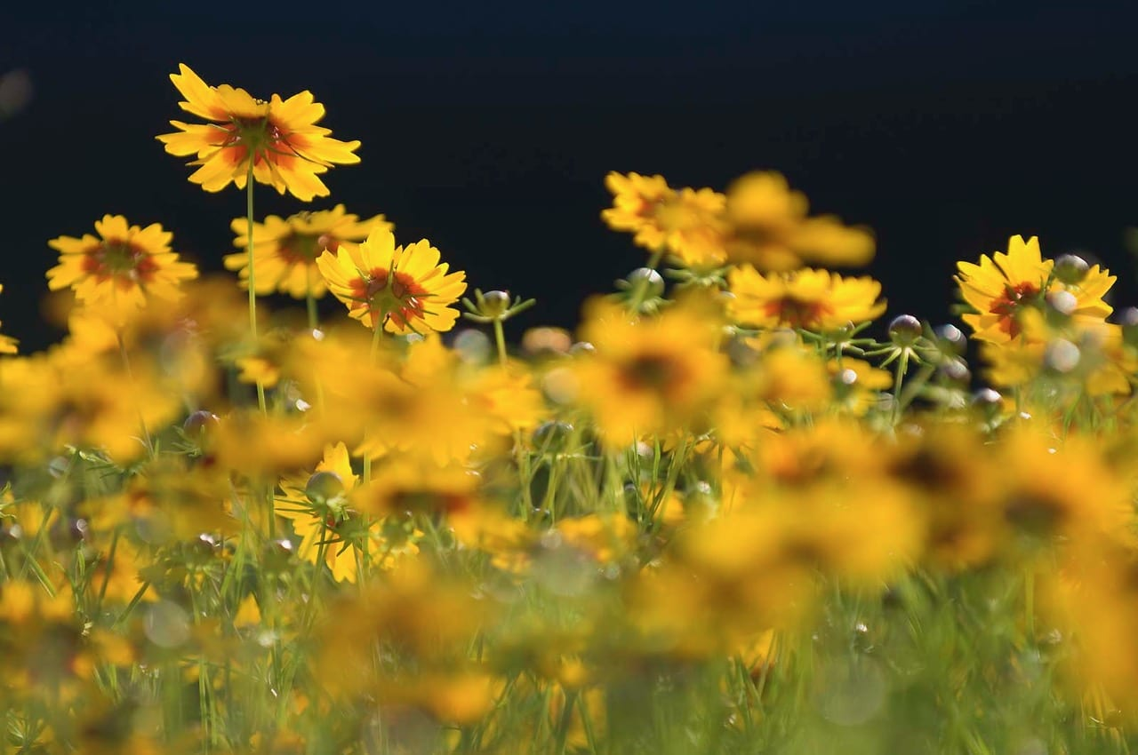 photo-for-wildflowers-class