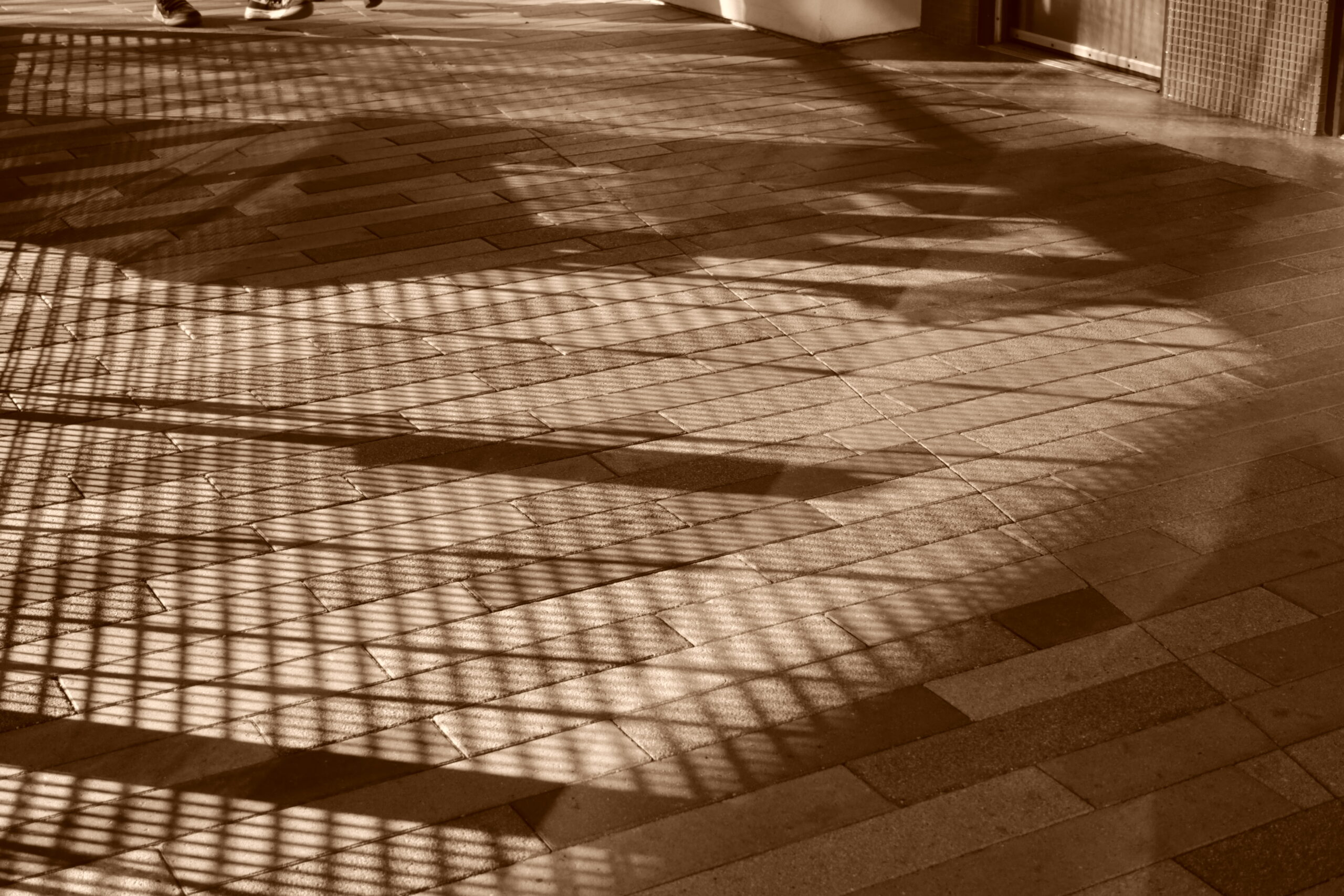 ike-zach-shadows-2